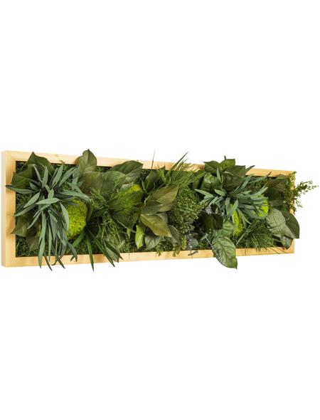 Moosbild Lärchenrahmen, BxHxT: 20 x 70 x 8 cm, grün
