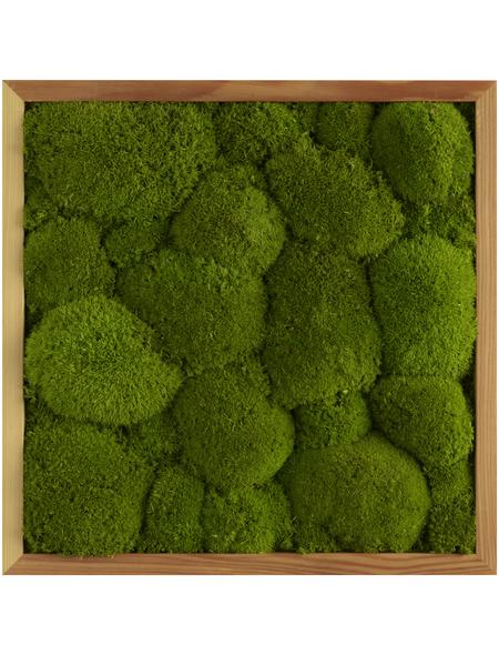 Moosbild Lärchenrahmen, BxHxT: 35 x 35 x 6 cm, grün
