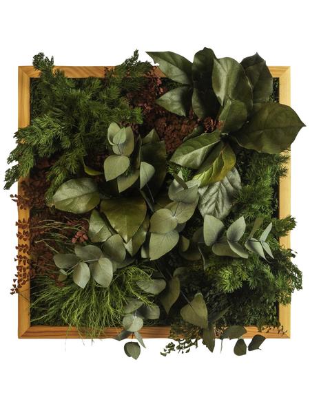 Moosbild Lärchenrahmen, BxHxT: 35 x 35 x 8 cm, grün