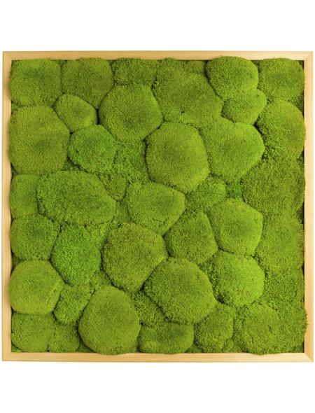 Moosbild Lärchenrahmen, BxHxT: 55 x 55 x 6 cm, grün