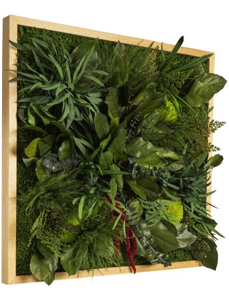Moosbild Lärchenrahmen, BxHxT: 55 x 55 x 8 cm, grün