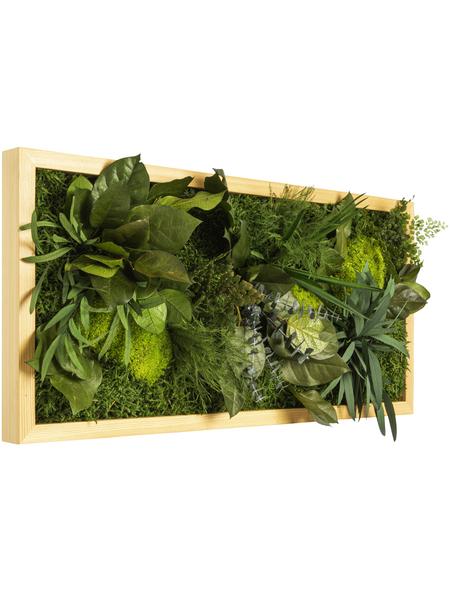 Moosbild Lärchenrahmen, BxHxT: 57 x 27 x 8 cm, grün