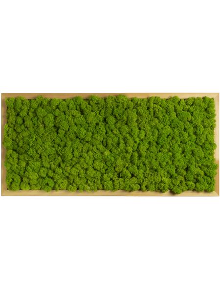 Moosbild Lärchenrahmen  Islandmoos Apfelgrün, BxHxT: 57 x 27 x 6  cm
