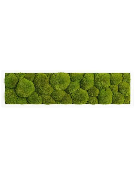 Moosbild weißer Rahmen Ballenmoos Apfelgrün, BxHxT: 70 x 20 x 6 cm