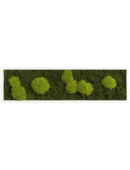 Moosbild weißer Rahmen , BxHxT: 20 x 70 x 6 cm, grün