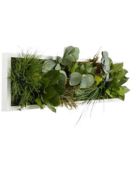 Moosbild weißer Rahmen, BxHxT: 20 x 70 x 8 cm, grün