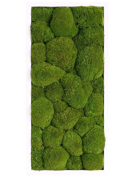 Moosbild weißer Rahmen, BxHxT: 27 x 57 x 6 cm, grün