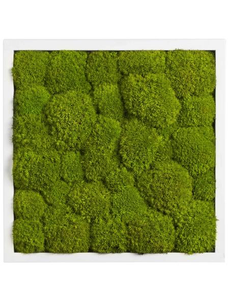 Moosbild weißer Rahmen, BxHxT: 35 x 35 x 6 cm, grün