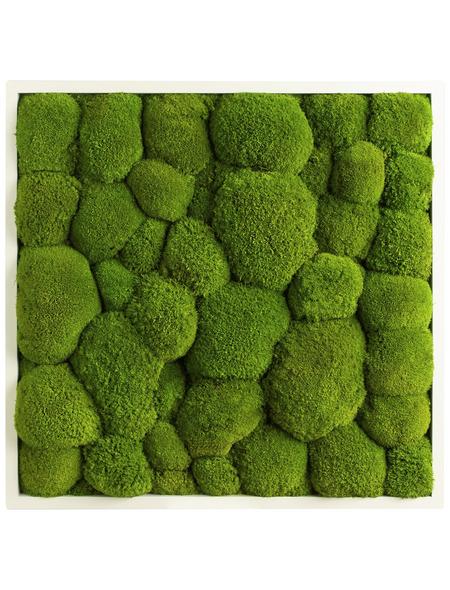 Moosbild weißer Rahmen, BxHxT: 55 x 55 x 6 cm, grün