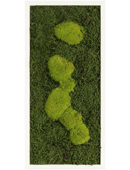 Moosbild weißer Rahmen, BxHxT: 57 x 27 x 6 cm, grün