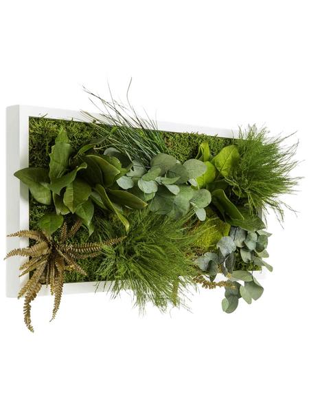 Moosbild weißer Rahmen, BxHxT: 57 x 27 x 8 cm, grün