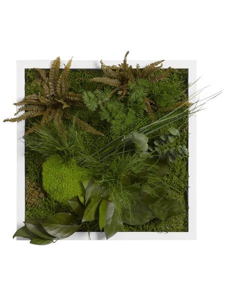 Moosbild weißer Rahmen Dschungel , BxHxT: 35 x 35 x 8 cm