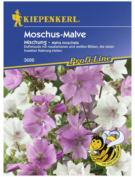 KIEPENKERL Moschus-Malve, Malva moschata, Samen, Blüte: mehrfarbig