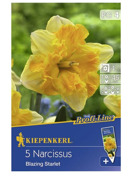 KIEPENKERL Narzisse x Hybrida Narcissus