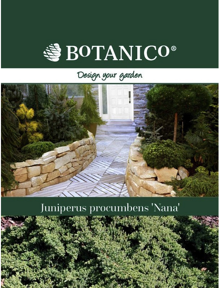 Niederer Zwergwacholder procumbens Juniperus »Nana«