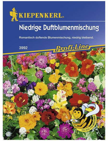 KIEPENKERL Niedriger Duftblumen Mix, Samen, Blüte: mehrfarbig