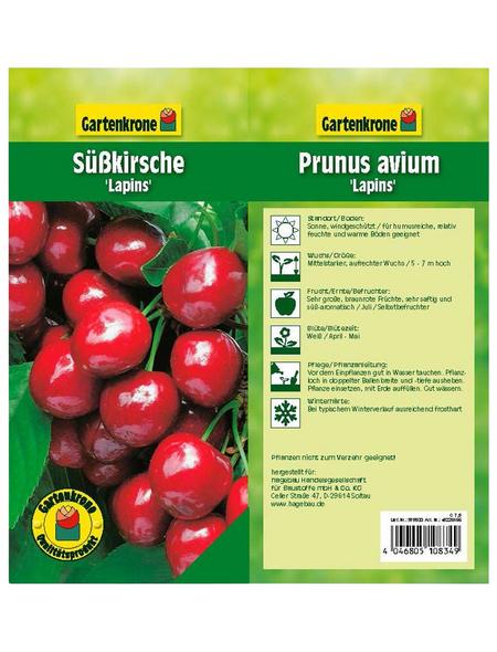 GARTENKRONE Obstbaum »Süßkirsche«, Creme