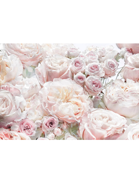 KOMAR Papiertapete »Spring Roses«, Breite: 368 cm, inkl. Kleister