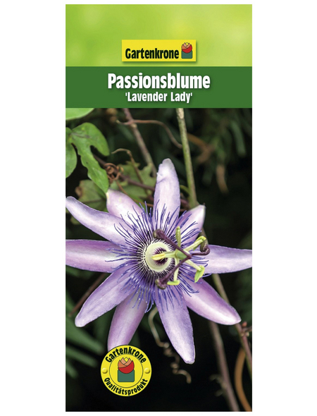 GARTENKRONE Passionsblume, Passiflora caerulea »Lavender Lady«, Blüten: violett