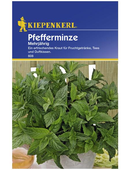 KIEPENKERL Pfefferminze piperita Mentha