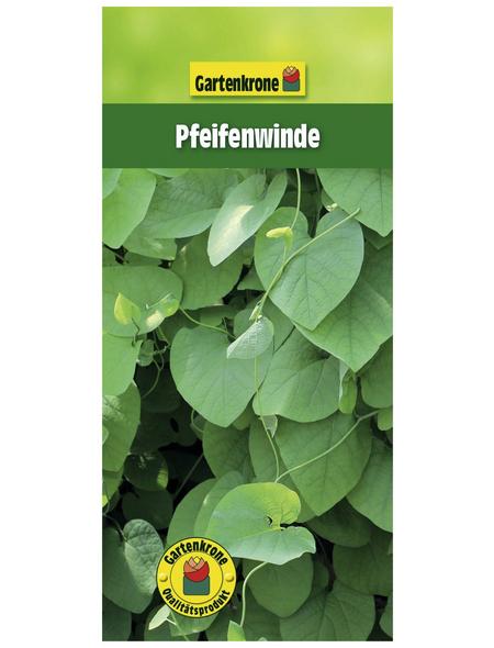 GARTENKRONE Pfeifenwinde, Aristolochia macrophylla, Blüten: creme
