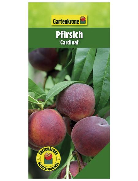GARTENKRONE Pfirsich, Prunus persica »Cardinal«, Früchte: süß, zum Verzehr geeignet