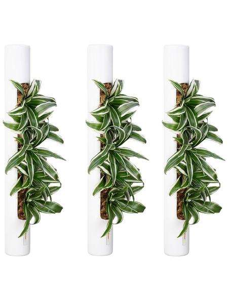 Pflanzen in Keramik 3er-Set bigTube, weiss, BxHxT: 65 x 7,5 x 22  cm