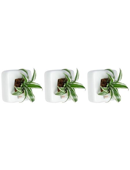 Pflanzen in Keramik 3er-Set, BxHxT: 16 x 16 x 22 cm, weiß