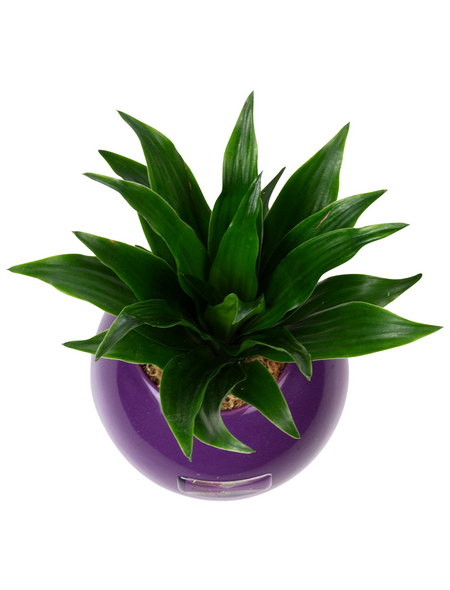 Pflanzen in Keramik Ball, violett, BxHxT: 12 x 12 x 22  cm