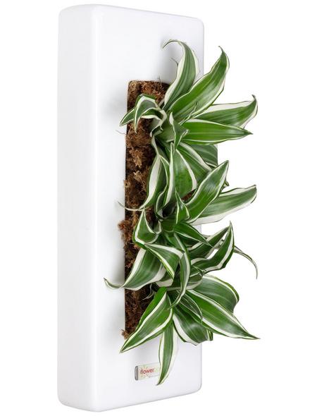 Pflanzen in Keramik, BxHxT: 40 x 16 x 22 cm, weiß