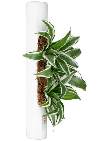 Pflanzen in Keramik, BxHxT: 40 x 6,5 x 22 cm, weiß