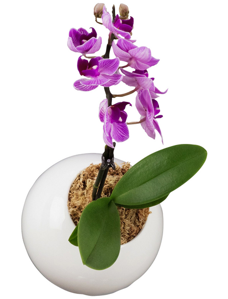 Pflanzen in Keramik Orchidee-Edition Ball, weiss, BxHxT: 12 x 12 x 22  cm