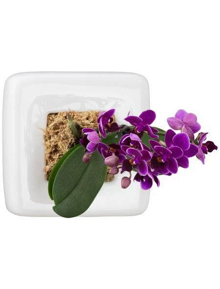 Pflanzen in Keramik Orchideen-Edition  Box 1, weiss, BxHxT: 16 x 16 x 22  cm