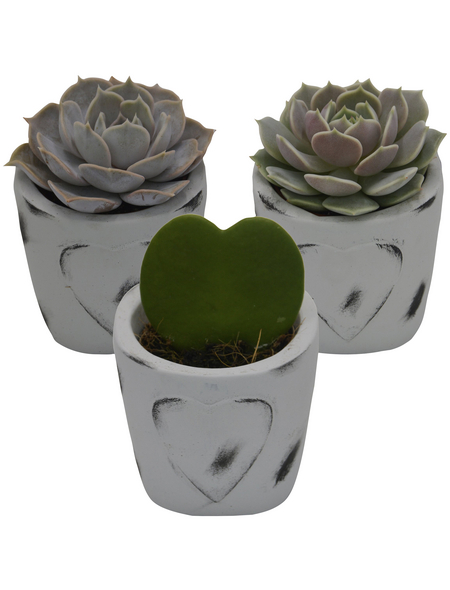 »Pflanzen-Set mit Übertöpfen Beton- Herz«