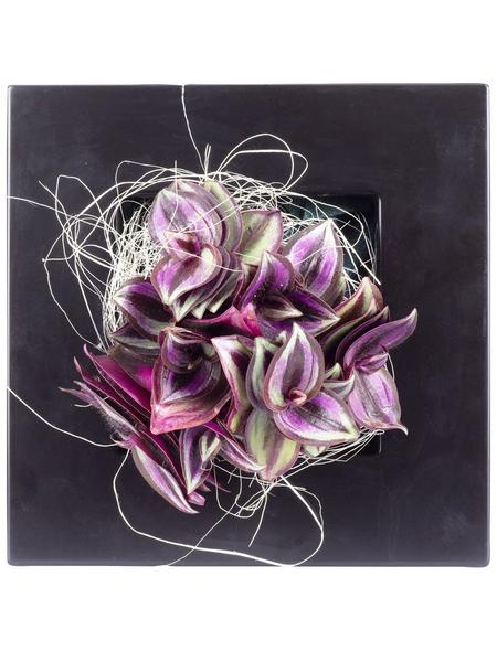 flowerbox Pflanzenbild, BxHxT: 17 x 17 x 6 cm, schwarz