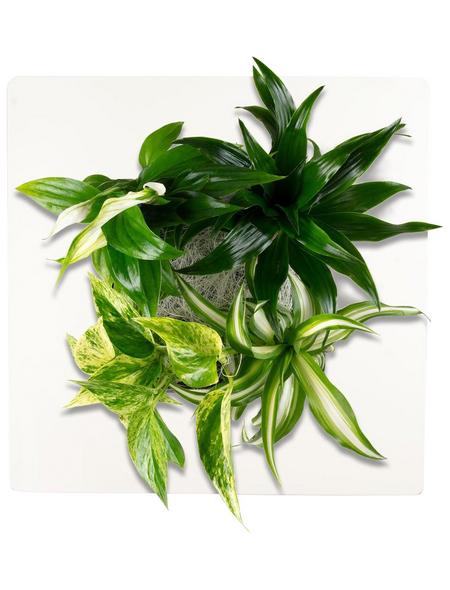 Pflanzenbild »Flowerwall«, BxHxT: 31 x 31 x 22 cm, weiß