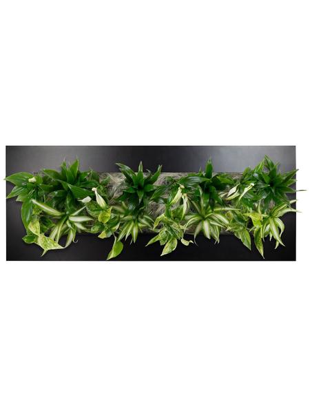 Pflanzenbild Pflanzenbild »Flowerwall« Premium , max. Wuchshöhe: 40  cm, mehrjährig