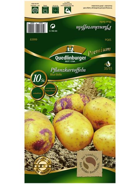 Quedlinburger Pflanzkartoffel, Solanum tuberosum »Blue Belle «, 10 Stück