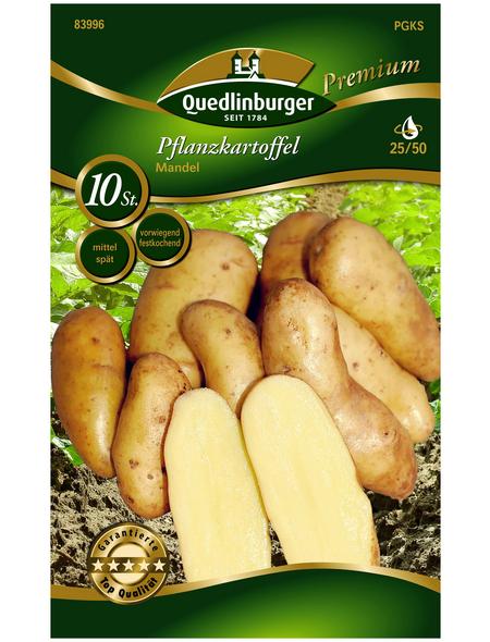 Quedlinburger Pflanzkartoffel, Solanum tuberosum »Mandel«, 10 Stück