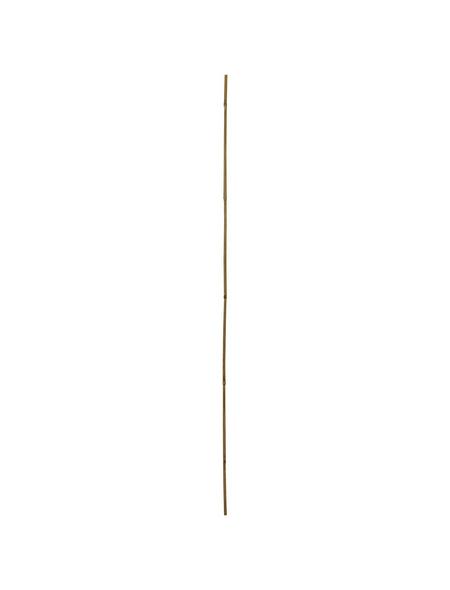 WINDHAGER Pflanzstab, Höhe: 180 cm, Tonkin-Bambus