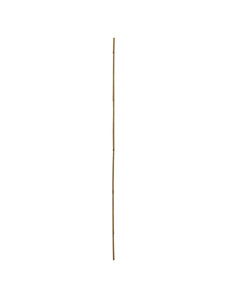 WINDHAGER Pflanzstab, tonkin_bambus