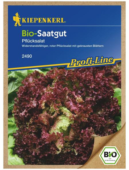 KIEPENKERL Pflücksalat sativa var. crispa Lactuca »Lollo rossa«