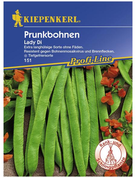 KIEPENKERL Prunkbohne coccineus Phaseolus
