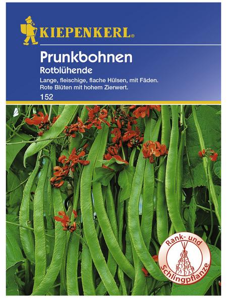 KIEPENKERL Prunkbohne coccineus Phaseolus »Rotblühende«