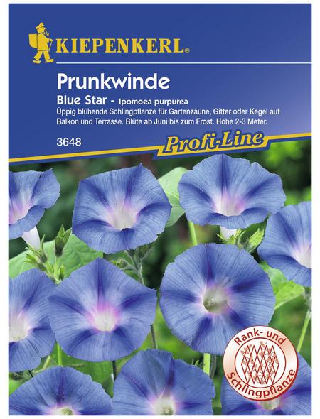 KIEPENKERL Prunkwinde, Ipomoea purpurea, Samen, Blüte: blau