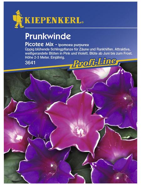 KIEPENKERL Prunkwinde/Trichterwinde, Ipomoea tricolor, Samen, Blüte: mehrfarbig