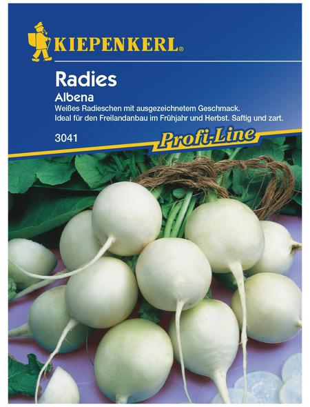 KIEPENKERL Radieschen Raphanus sativus var. sativus »Albana«