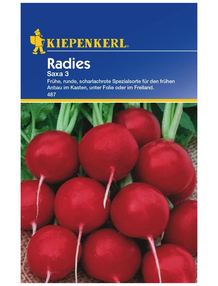 KIEPENKERL Radieschen Raphanus sativus var. sativus »Saxa 3«
