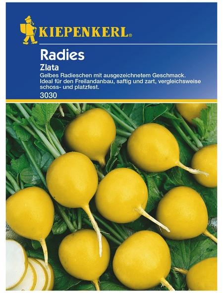 KIEPENKERL Radieschen Raphanus sativus var. sativus »Zlata«