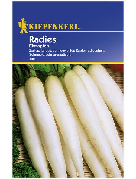 KIEPENKERL Radieschen sativus var. sativus Raphanus